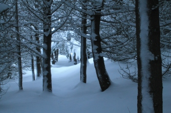 The forest, after two feet of snow.