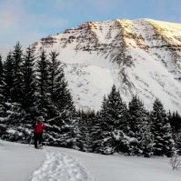 It is a lot easier to walk in snowshoes than hiking boots.
