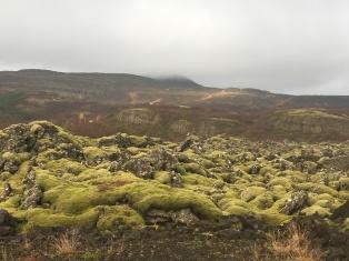 Enchanting, moss-covered landscape